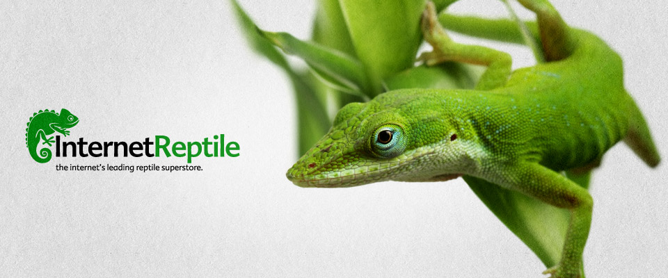 internet_reptile_branding_1